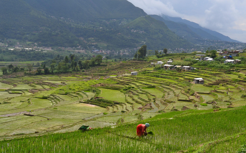 Covid crisi Nepal
